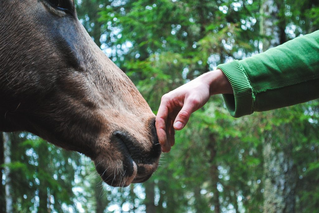 Hand touching a Horse to ease the symptoms of Alzheimer's
